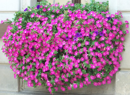 Unsere Leistungen Www Blumen Welzel De